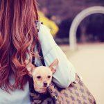 【日本刀 逸話伝説】生類憐れみの令本当の意味!なぜ犬公方ってなったの?
